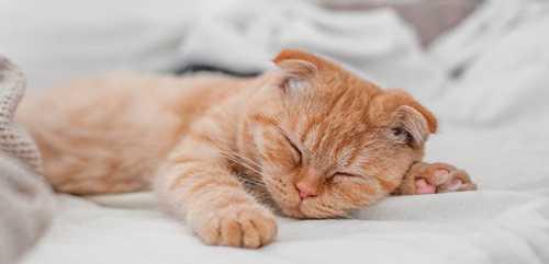 К чему снится сахар толкование сна, в котором