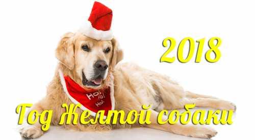 Гороскоп на 2018 год Собаки по знакам Зодиака