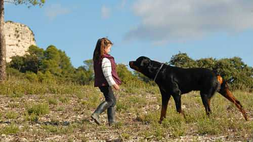 К чему снится большая собака, убегать от большой